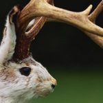 Profile picture of jackalope